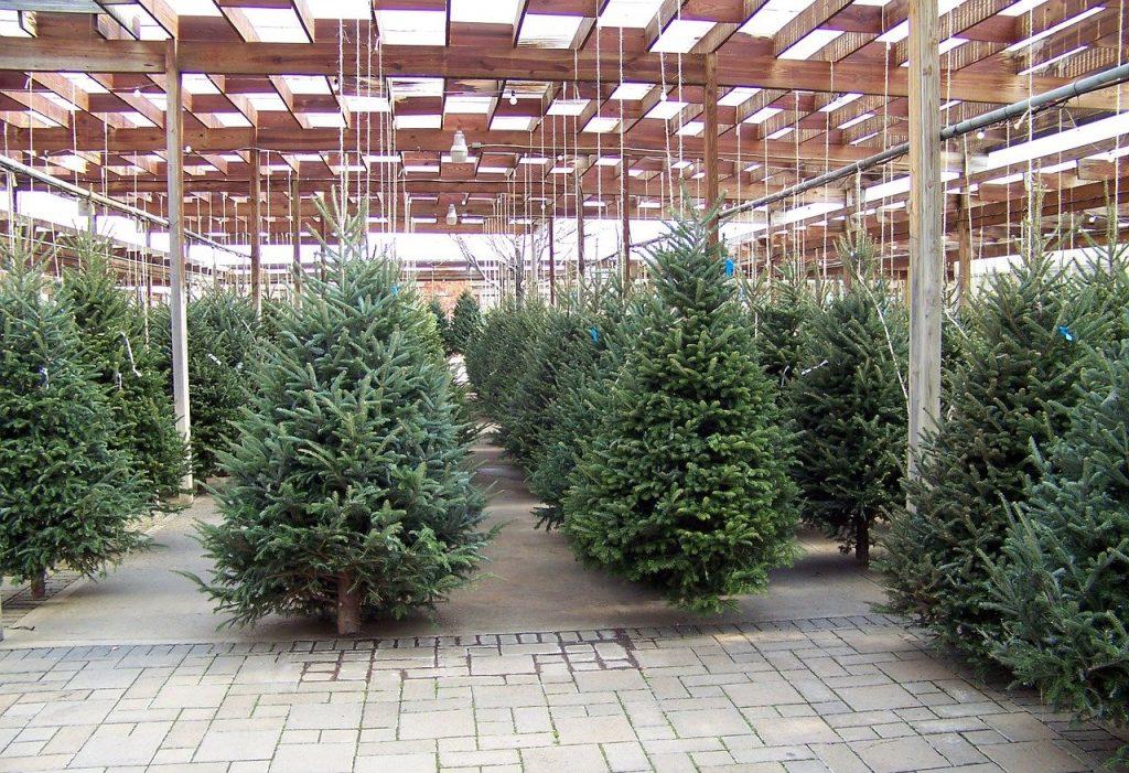 christmas, trees, nursery